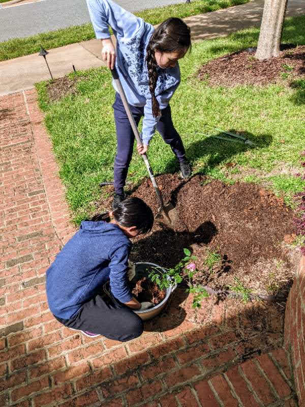 Earth Day - students plant plants