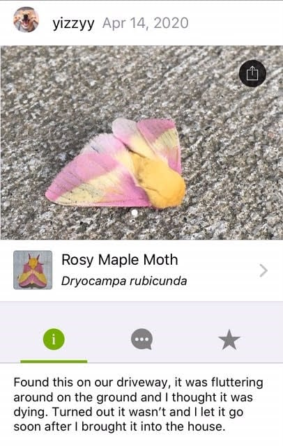Earth Day - iNaturalist moth